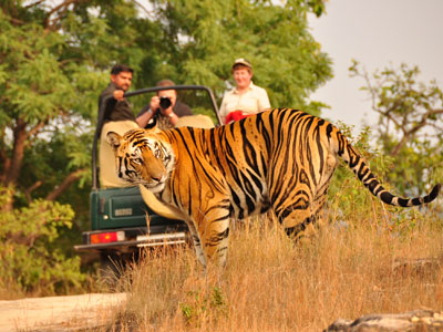 12 Days – India Tiger Safari Trail Tour