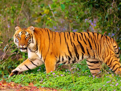 15 Days Central India Including Tiger Safari Tour