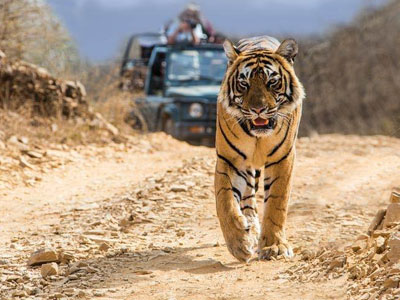 16 Days heritage Rajasthan Including Tiger Safari Tour